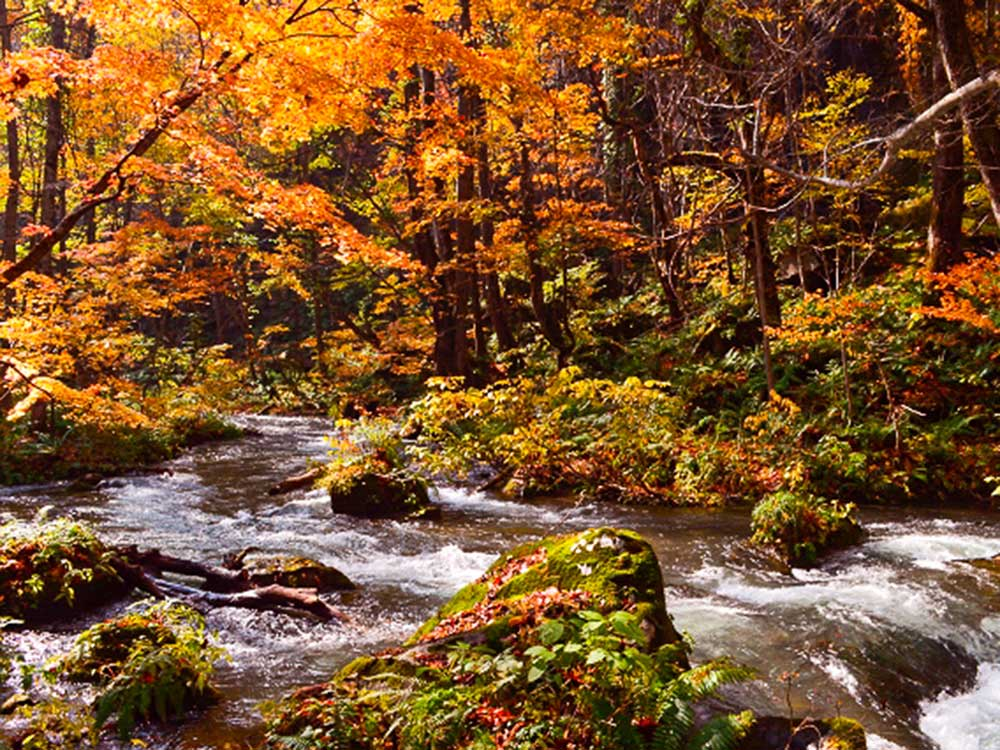 奥入瀬渓流の紅葉風景