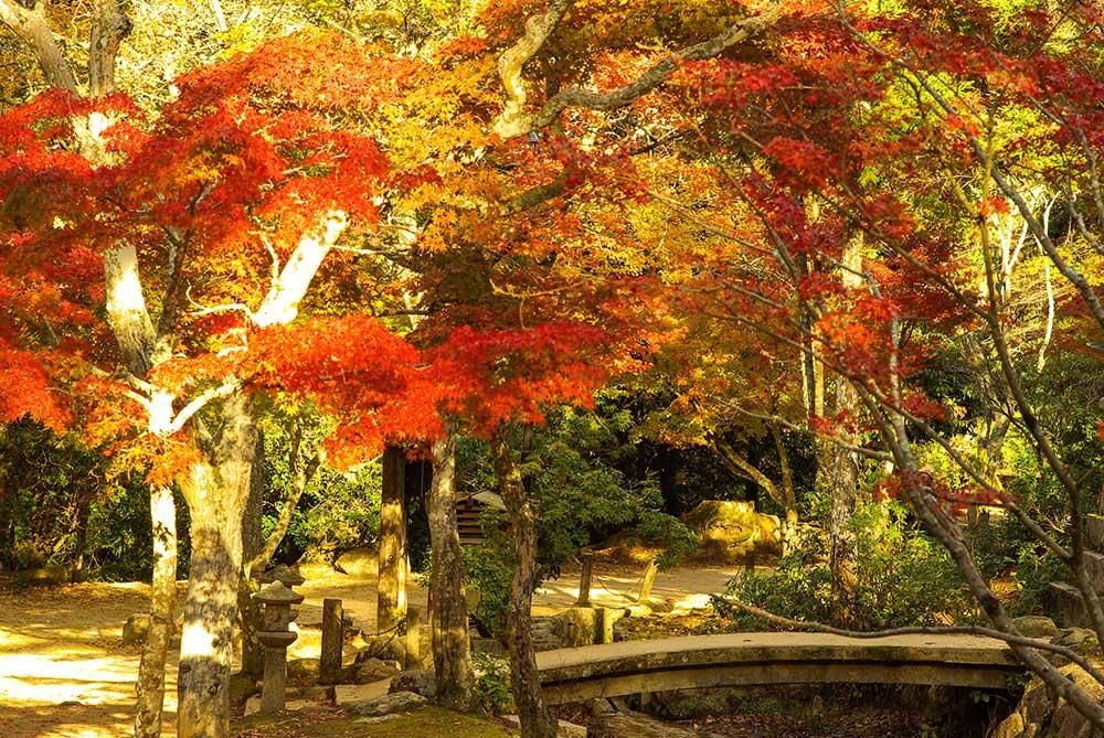宮島の紅葉風景