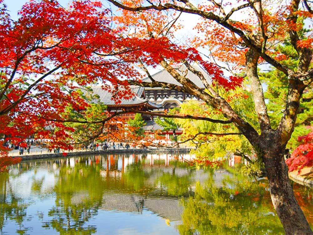 東大寺の紅葉風景