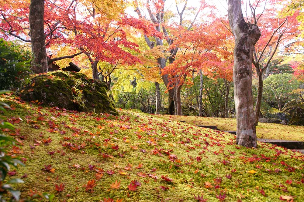 箱根の紅葉風景