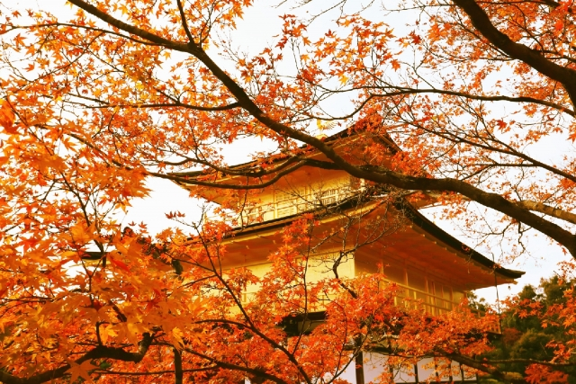 金閣寺の紅葉写真